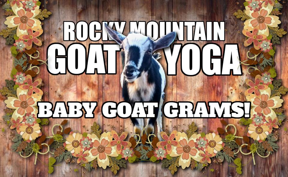 Rocky Mountain Goat Yoga Baby Goat Grams